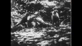 Call of the Wilderness (1932)