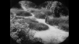 Call of the Forest (1949)